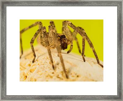 The Spider Series Iv Framed Print by Marco Oliveira