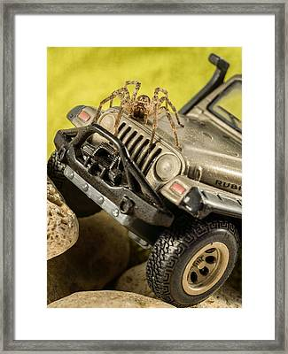 The Spider Series Ix Framed Print by Marco Oliveira