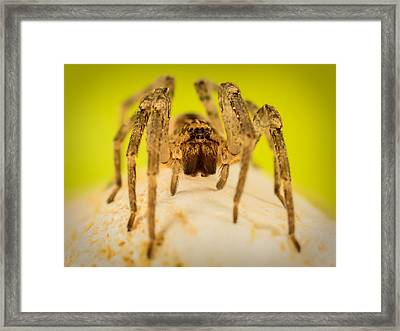 The Spider Series V Framed Print by Marco Oliveira