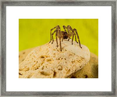 The Spider Series Vi Framed Print by Marco Oliveira