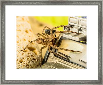 The Spider Series Vii Framed Print by Marco Oliveira