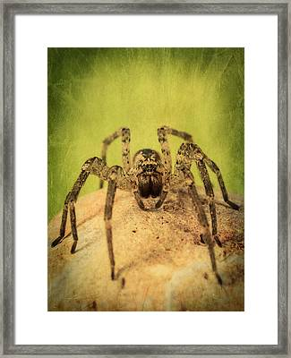The Spider Series X Framed Print by Marco Oliveira