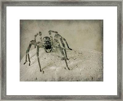 The Spider Series Xi Framed Print by Marco Oliveira