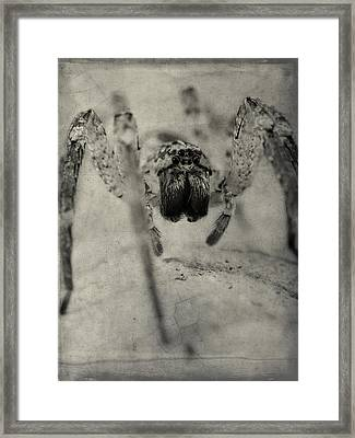 The Spider Series Xii Framed Print by Marco Oliveira