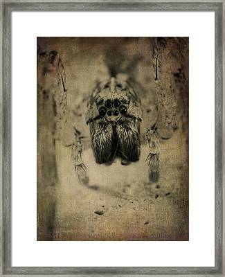 The Spider Series Xiii Framed Print by Marco Oliveira