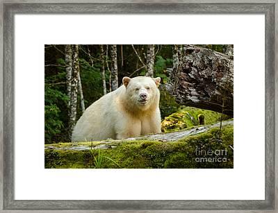 The Spirit Bear Framed Print by Melody Watson