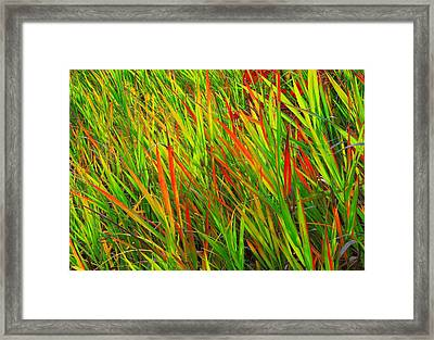 Framed Print featuring the photograph The Splash Colors by Kadek Susanto