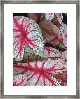 The Splendour Of Leaves Framed Print by Marlene Robbins