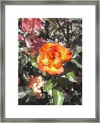 The Spring Rose Framed Print
