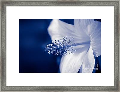 The Spring Wind Whisper Framed Print by Sharon Mau