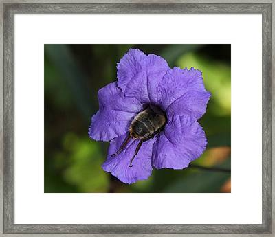 The Squeeze Framed Print by Erin Tucker