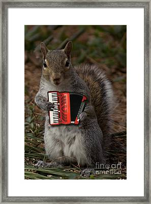The Squirrel And His Accordion Framed Print