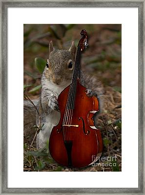 The Squirrel And His Double Bass Framed Print