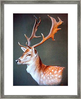 Framed Print featuring the painting The Stag by Rosemary Colyer