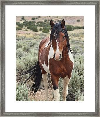 The Stallion Framed Print by Gene Praag