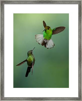 The Standoff Framed Print by Chris Jimenez