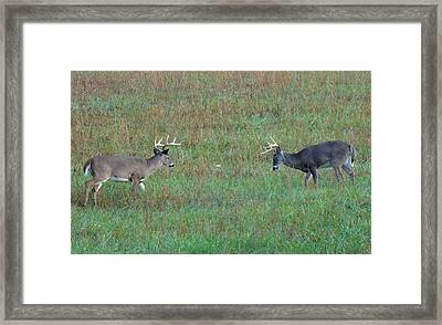 The Standoff In Cades Cove Framed Print by Dan Sproul