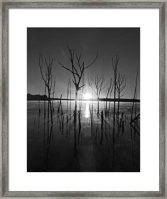 The Star Arrives Framed Print by Raymond Salani III
