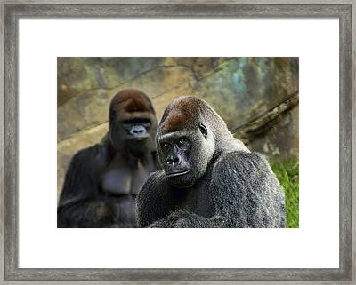 The Stare Framed Print