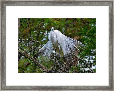 The Stare Down Framed Print by Kathy Baccari