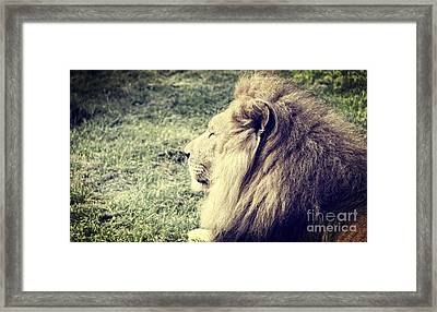 The Stare Framed Print by Jackie Mestrom