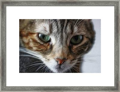 00002 The Stare Framed Print by Photographic Art by Russel Ray Photos