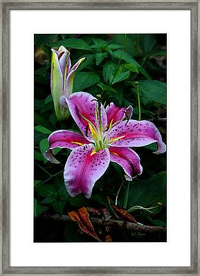 Framed Print featuring the photograph The Stargazer Lily  by James C Thomas