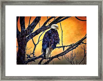 The Staring Eagle Framed Print