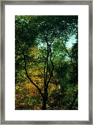 Framed Print featuring the photograph The Start Of Fall by Ben Kotyuk