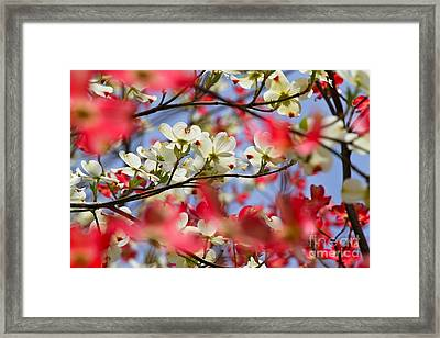The State Flower Of Framed Print by Jay Nodianos