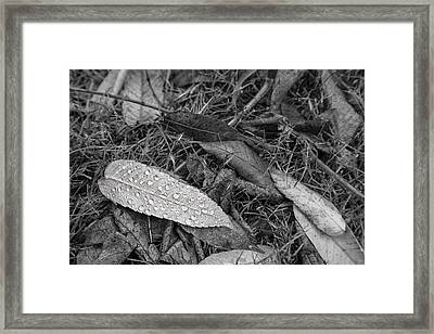 The State Of Things Framed Print