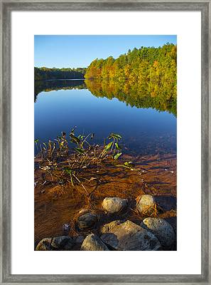 The Still Of The Day Framed Print by Karol Livote