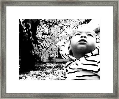Framed Print featuring the photograph The Stoic Zebra  by Jessica Shelton