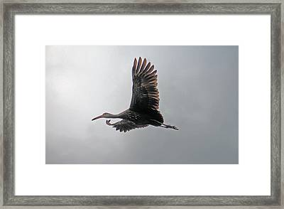The Stork Framed Print
