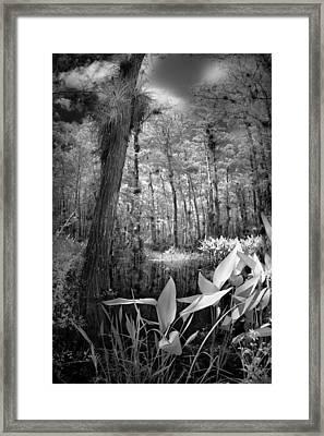 The Strand Framed Print by Bradley R Youngberg