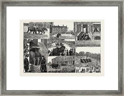 The Strange Adventures Of Two Runaway Elephants In Kentish Framed Print by English School