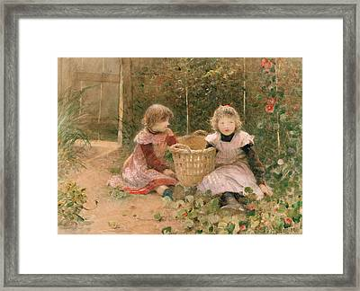 The Strawberry Patch Framed Print
