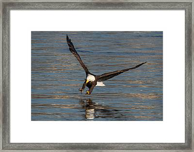 The Strike  Framed Print by Glenn Lawrence