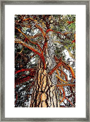Framed Print featuring the photograph The Strong One by Joseph J Stevens