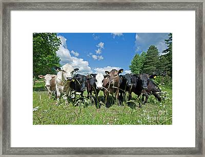 The Summer Guests Framed Print