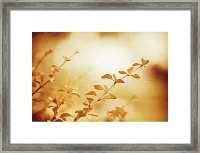 The Sun Descending Framed Print