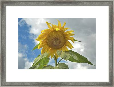 The Sun Is Out Framed Print by Arthur Fix