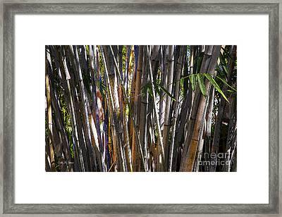 The Sun Through Bamboo Framed Print