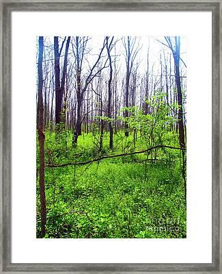 The Sun Through The Trees Framed Print by Matthew Peek