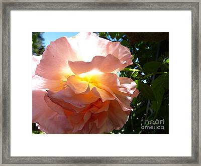 The Sun Within Framed Print by Anat Gerards
