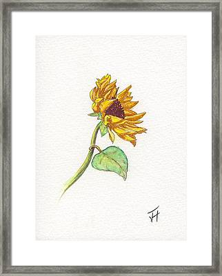 The Sunflower Framed Print
