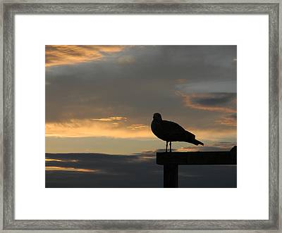 The Sunset Perch Framed Print