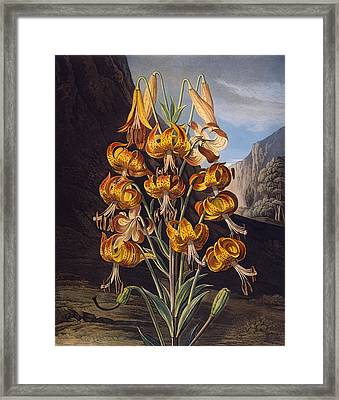 The Superb Lily, From The Temple Framed Print