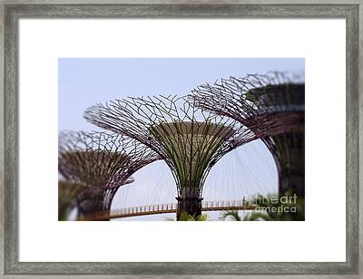 The Supertrees Framed Print
