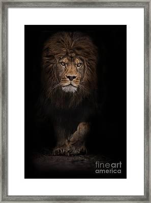 The Survivor Framed Print by Ashley Vincent